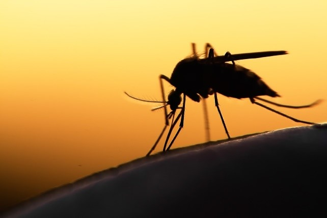 4 facts you must know about mosquitos, zika, and the west nile virus