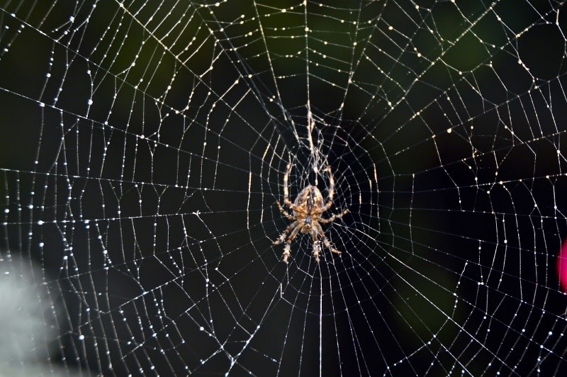 Tips for keeping spiders away