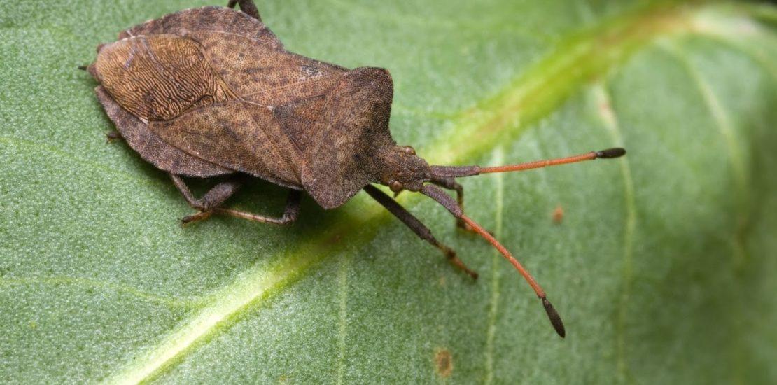 Bug on a green leaf