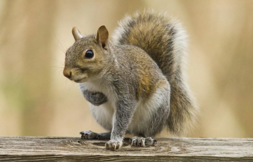 Squirrels and pest control in Southern California